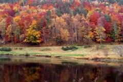 Autumn-600x400-2